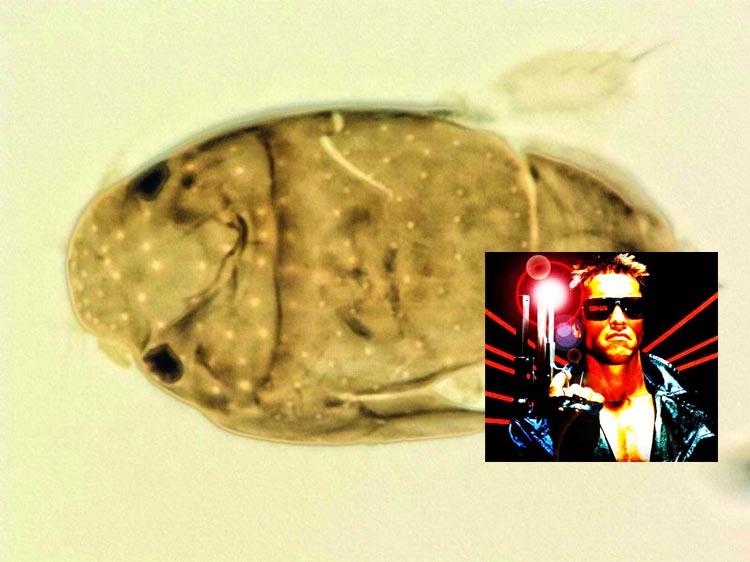 Fly named after Arnold Schwarzenegger