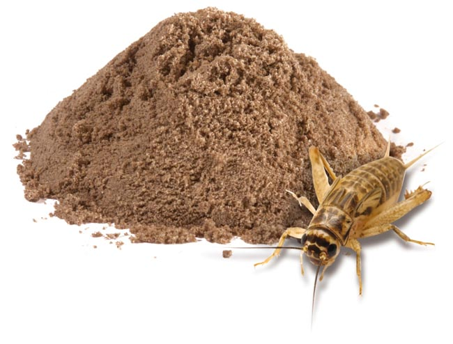 Insect-Based Protein Powder Trending in 2018 - Ento Nation