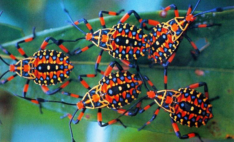 10 cutest and most colorful bugs on earth ento nation