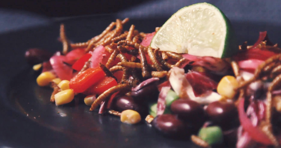 Video recipe mexican salad with mealworms ento nation video recipe mexican salad with mealworms forumfinder Image collections
