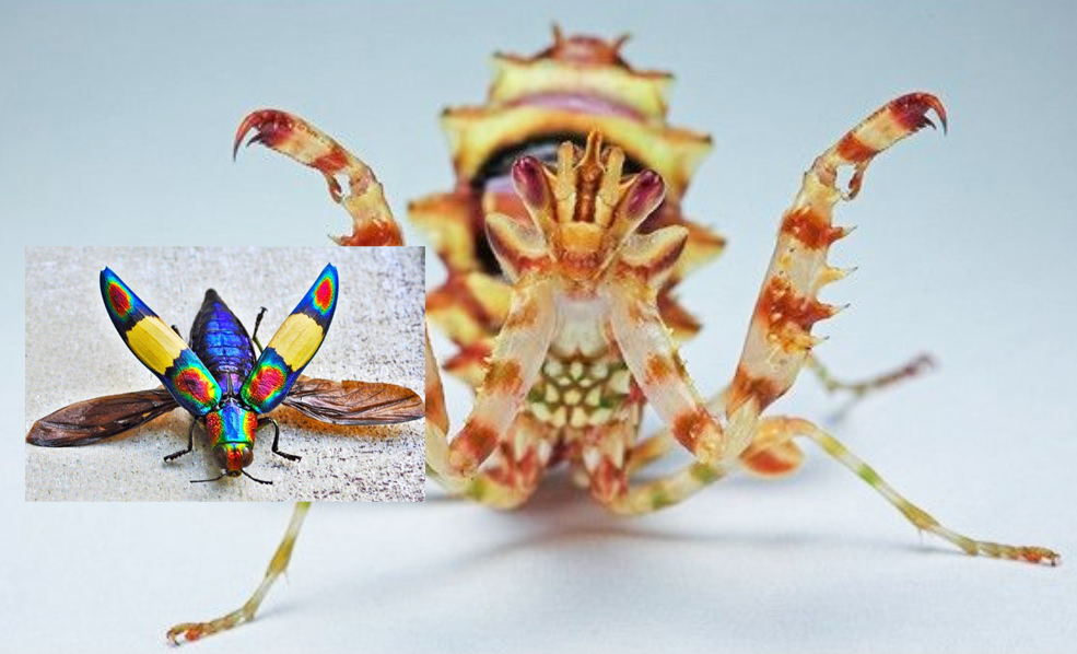 Insect Identification: Experts and Guides to ID That Bug You